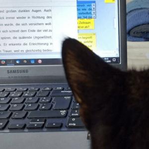 Ich liebe es zu schreiben und die Katze liebt es, dass ich endlich still sitze!